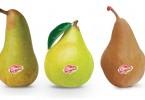 Nasce il marchio Opera®. Le prime pere sul mercato il 5 ottobre