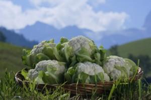 Cavolfiore Alto Adige