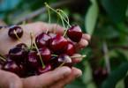 Piccoli frutti e verdura in AltoAdige