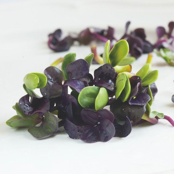 Pearl Herbs– 2BFresh, Israele. Ideale per i contorni e la decorazione: minuscole erbette fresche in 10 variazioni.