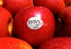 Fruit Logistica 2016 - Mele Club envy nello stand dell'Alto Adige