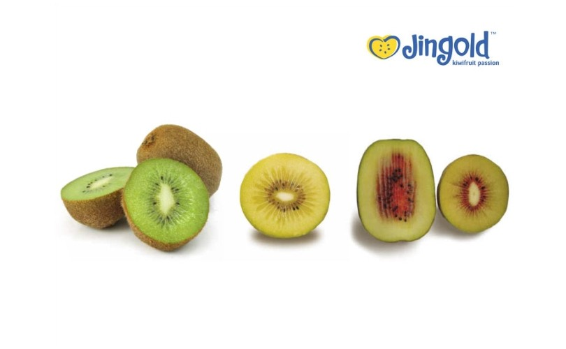 Jingold nuove varietà