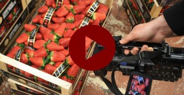 Fragole Candonga - Video Ortomercato di Milano