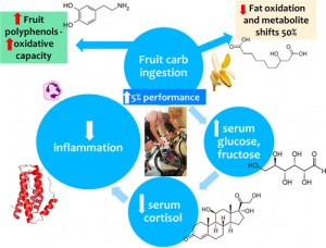 MetabolomicsBasedAnalysisofBananaandPearIngestiononExercisePerformanceandRecovery