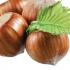 Nocciole: il Mipaaf convoca il Tavolo corilicolo nazionale