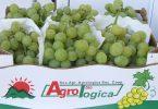 UvaDaTavolaBio_Agrologica