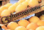 perenashi_romanisio