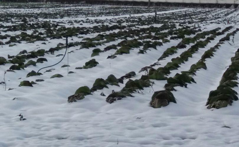 """Gelo torna indietro, si mescolerà con aria atlantica: peggioramento meteo, altra neve"""""""