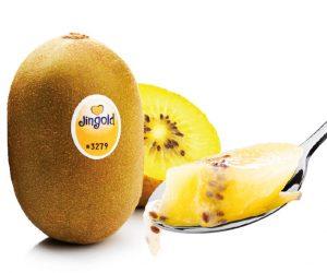 Jingold kiwi giallo