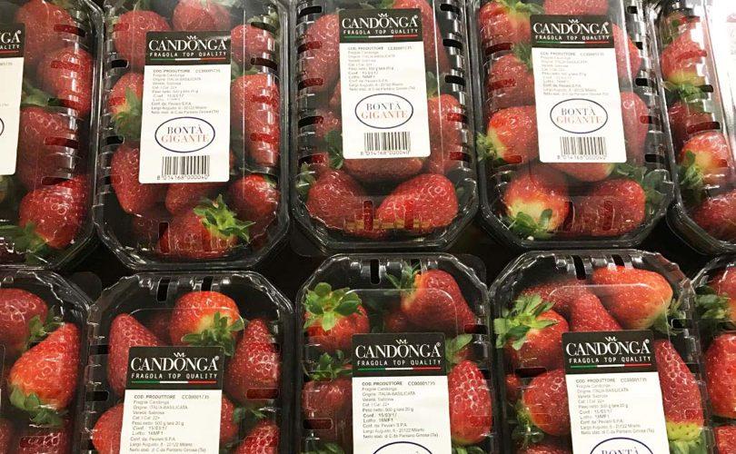 fce53e687784 Supermercati Il Gigante. Nella linea premium arriva Candonga Fragola ...
