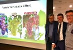 UvaDaTavola_Grape&GrapeGroup