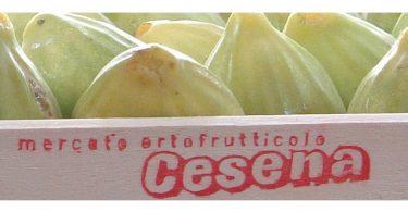 MercatoOrtofrutticoloCesena_Scarpellini