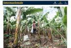BananeFaritrade_Internazionale