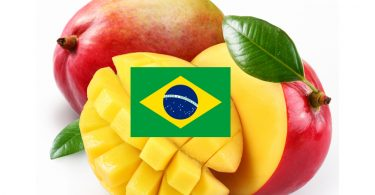 BrasileFruttaExportItalia