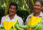 FairtradeBanane2016