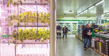 VerticalFarm_Inform_Supermercati