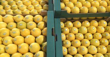 LimoneSiracusaIgp