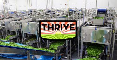Thrive_Turatti