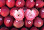 FruttaWebMelePolpaRossa