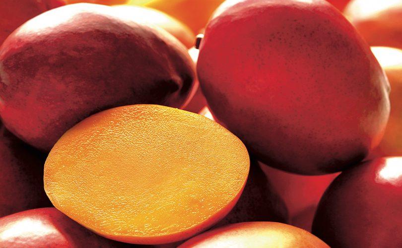 Mango_Consumi_Europa
