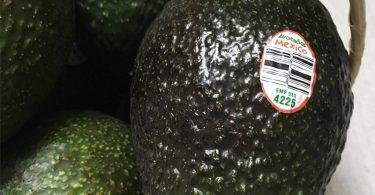 AvocadoMexico
