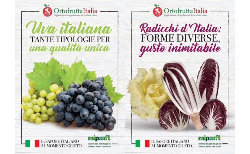 OrtofruttaItalia_UvaDaTavola_Radicchio_Poster