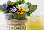 Fiori edibili Insalata dell'orto