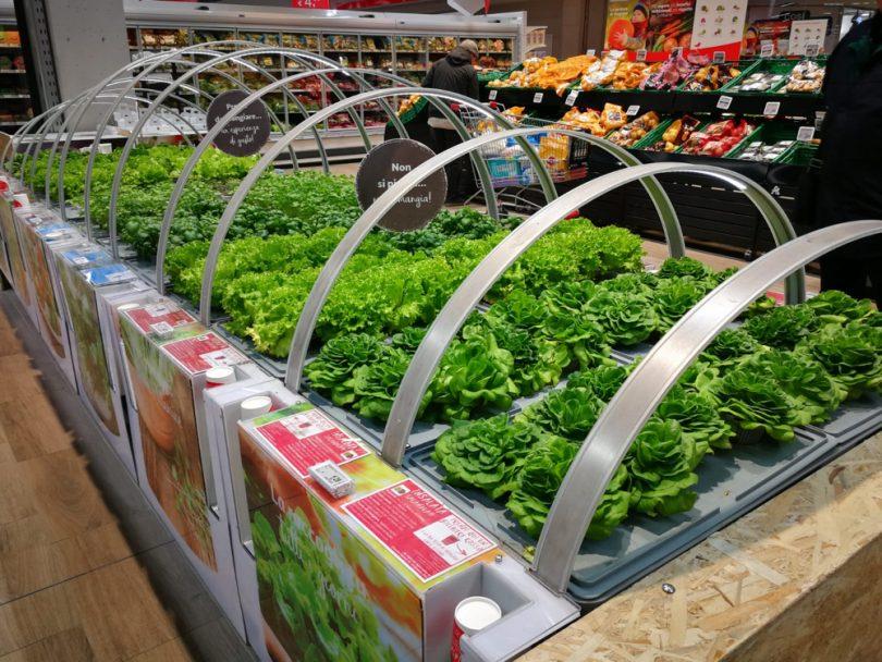 AuchanSerraaeroponicaTorino1