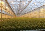 GreenhouseTechnologyVillage_Macfrut2019