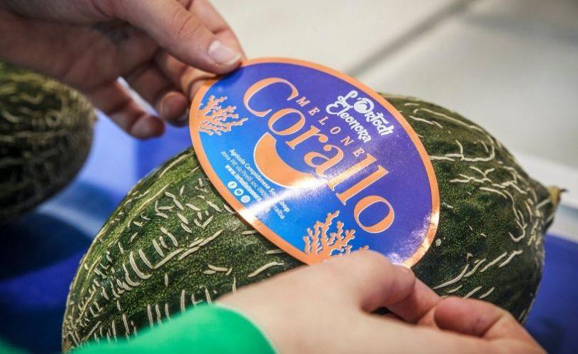 melone corallo Orto di Elenora