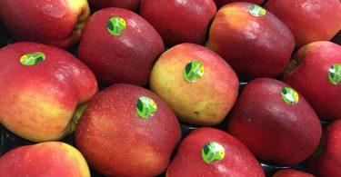 MelaSweeTango_FruitAttractionPresentazione_3