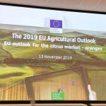 Osservatorio UE per gli agrumi. «Può essere davvero utile»