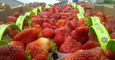 International Strawberry Symposium 2020