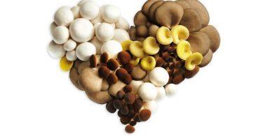 funghi treviso