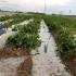 Maltempo, torna la grandine in Puglia