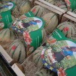 """Meloni, Pretto da Mirandola: """"Più che gli stagionali, mancano i turisti"""""""