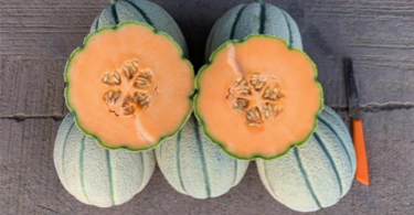 melone impero seminis