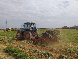 Lavorazione in campo per la raccolta delle arachidi