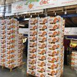 E-commerce arance: l'incognita della distribuzione