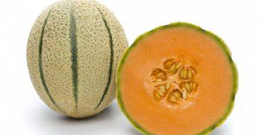 rijk-zwaan-meloni