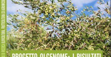 genoma olivo