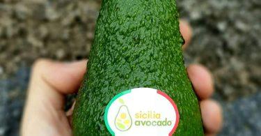 sicilia avocado