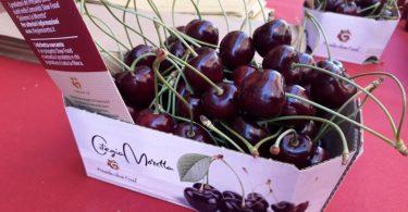 ciliegia moretta