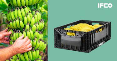 ifco banane