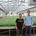 Basilico in serra idroponica con l'energia della discarica