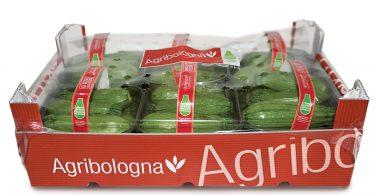 Zucchina Chiara di Bologna 2